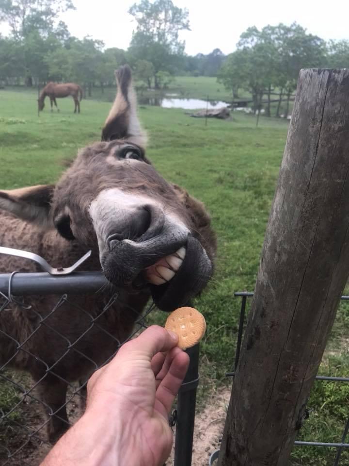 Ima Jean LOVES cookies